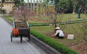 Gardener at Imperial Citadel of Thang Long