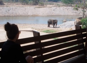 Girl looking at Elephant at Elephant Nature Park in Chiang Mai