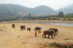 Landscape view of Elephant Nature Park Chiang Mai