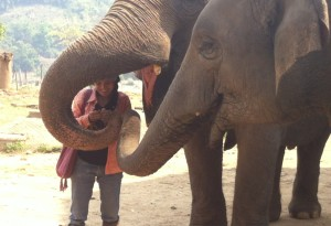 Owner with Elephants at Nature Park Chiang Mai