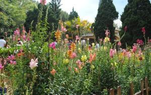 Thien Vien Truc Lam Da lat Monastery Garden Flowers