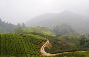 Boh Tea PLantation Foggy Morning View