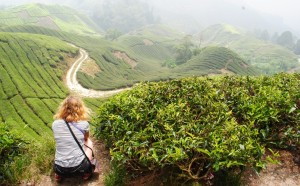 Boh tea plantation, Cameron Highlands, Malaysia - taking a photo