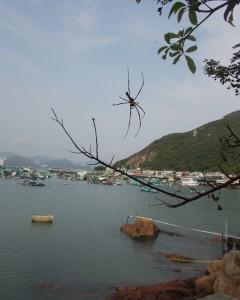 Lamma Island Hong Kong Giant Spider